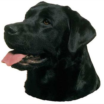 Black Labrador Head Vinyl Decal Elite K 9
