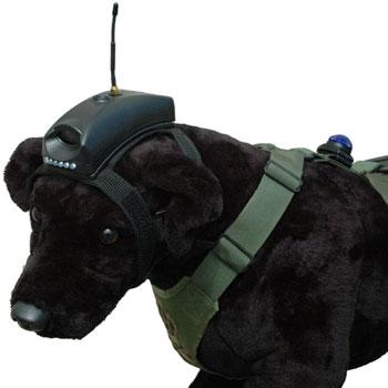 Sportdog Hound Hunter Add A Dog Remote Training Collar Sdr Ah as well Garmin Astro 320 Dc40 besides DCS besides 121808664027 furthermore Garmin Alpha 100 Tt15 Dog Gps Tracking Bundle. on gps dog tracking collars