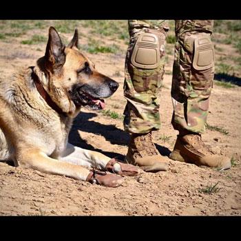 Dog Mocs Leather Dog Moccasins Elite K 9