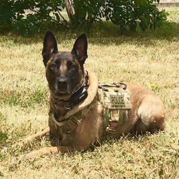 Stealth fighter k 9 ballistic vest large elite k 9 for Ballistic dog